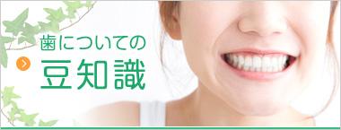 歯についての豆知識
